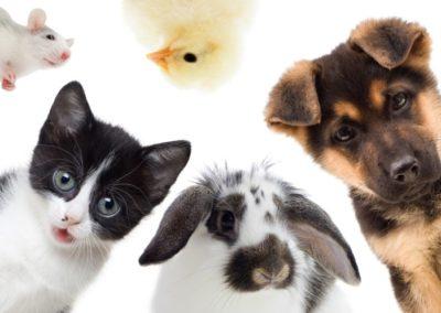 Animal Subcommittee